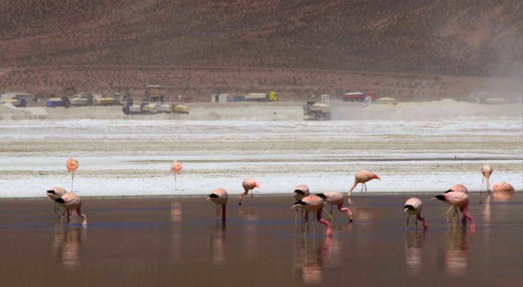 Minas de litio en Reserva Mundial de la Biósfera de Lauca